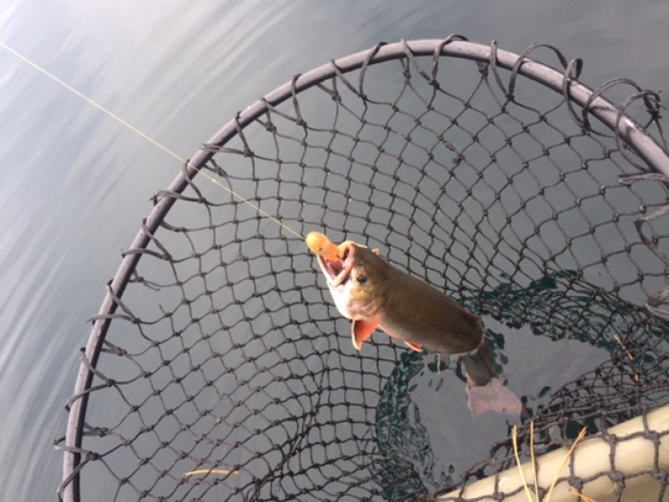 Quest for Ontario's Rarest Trout – The Aurora Trout